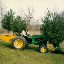 Brian tree transplanting_jpg